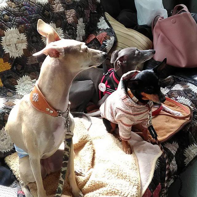 仲良く三匹でイートインソファでくつろいでくれてます #平野区 #パン屋 #鉄工所リノベーション #ドッグカフェ #わんちゃん可 #ペットのおやつも置いてます