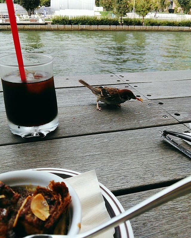 本日お休みいただいております。北浜でお茶してたらスズメが「何かくれ!」とやってきました テラス席が気持ちのいい季節となりましたね。#平野区 #パン屋